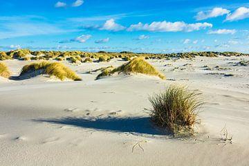 Landscape with dunes on the North Sea island Amrum, Germany van Rico Ködder