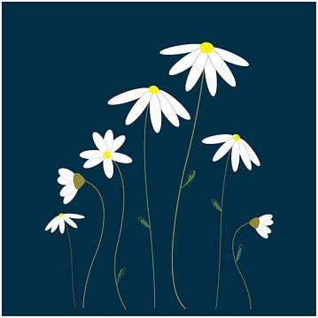 Margriet bloemen illustratie tekening van sarp demirel