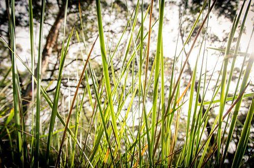 Gras op Bruny Island, Tasmanië