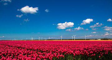 Tulpen van Patrick Ruitenbeek