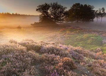 Morning light on a misty heath field sur