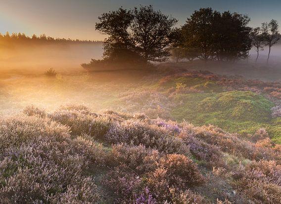 Mist en licht over het Mandeveld van Ron Buist