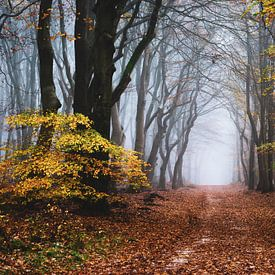 De rand van de herfst van Tvurk Photography