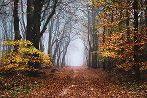 De rand van de herfst van