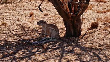 Een eekhoorn in de schaduw van Timon Schneider