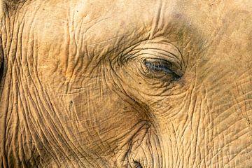 Auge in Auge mit einem Elefanten von Nicole Nagtegaal