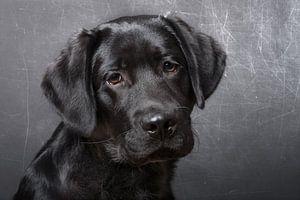 Zwart puppy