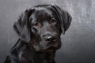 Zwart puppy  von Karen Havenaar