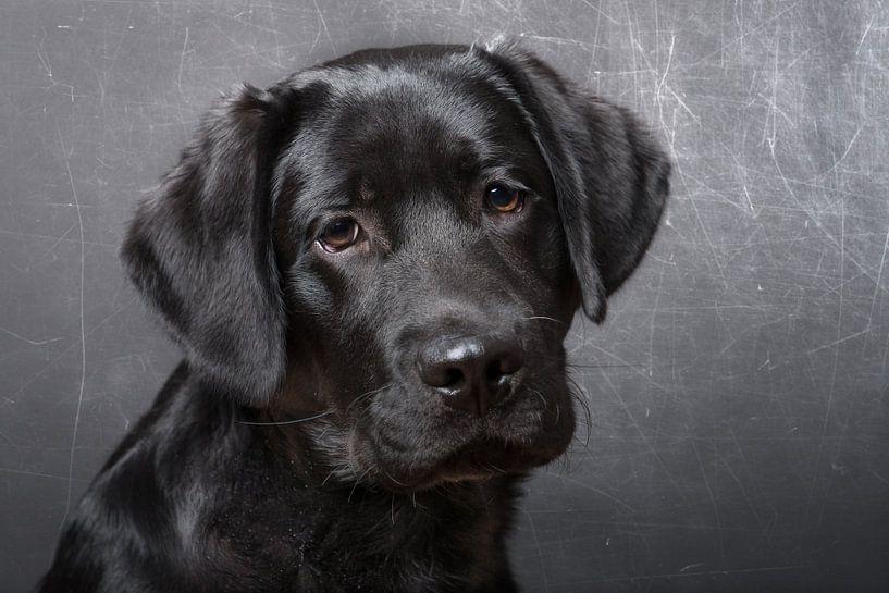 Zwart puppy  van Karen Havenaar