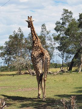 Giraffe op rug safari van Sanne Bakker