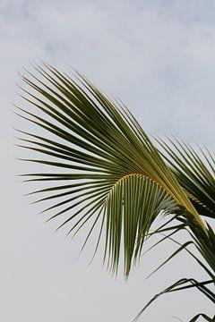 Curvy palmleaf von Jelle Ursem