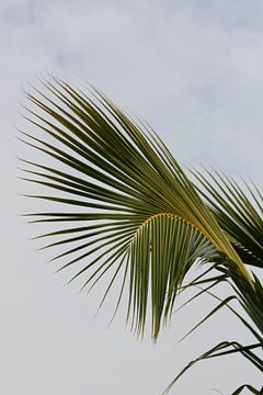 Curvy palmleaf van Jelle Ursem