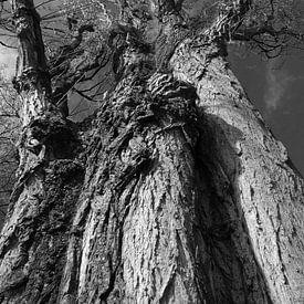 Tree Magic 123 sur MoArt (Maurice Heuts)