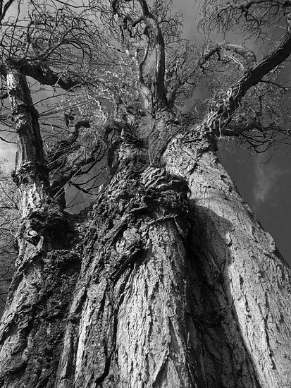 Tree Magic 123 van MoArt (Maurice Heuts)