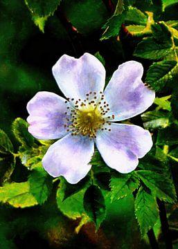 Blume von Alexandra Kleist
