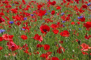 Rode klaprozen en blauwe korenbloemen van Anja Uhlemeyer-Wrona