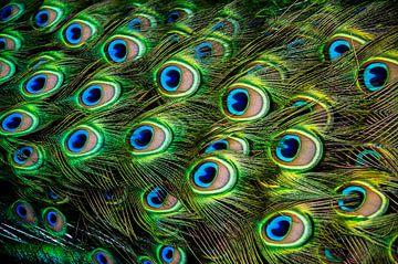 veren van een pauw von Sabrina Varao Carreiro