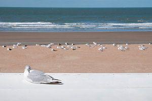 Meeuw op het strand in Westende van