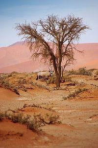 NAMIBIA ... Sossusvlei Oryx I