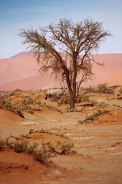 NAMIBIA ... Sossusvlei Oryx I van Meleah Fotografie