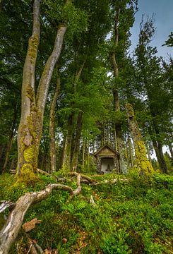 Kapel in het bos van Eelke Brandsma