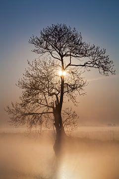 Nebliger Morgen von Halma Fotografie