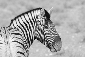 Zebra-Portrait von Petervanderlecq