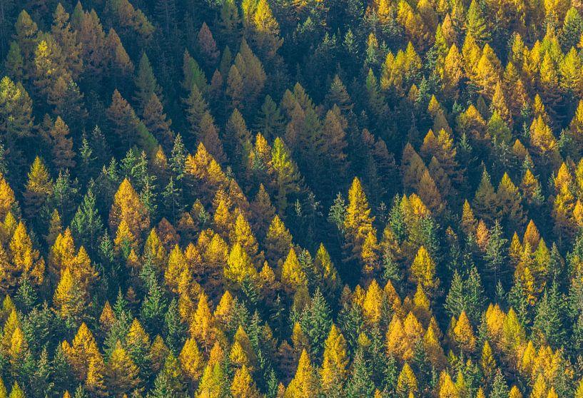 Herfst in Zwitserland van Bas Koster
