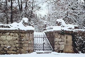 Leeuwen in de sneeuw van Andrea Fuchs