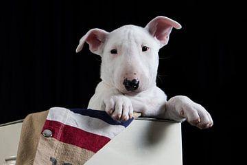 Bull terrier  van Esther Bax