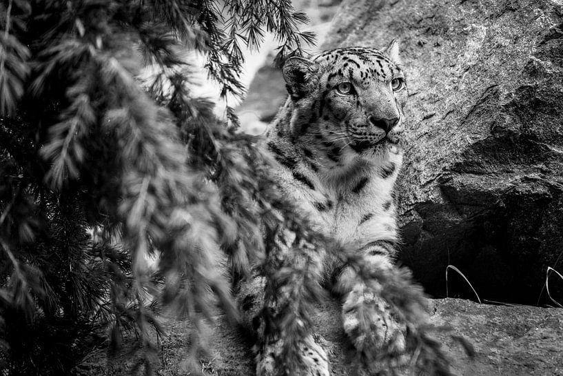 Gepard von Stephan Zaun