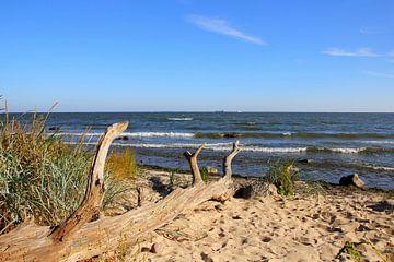 Strandgut  sur Ostsee Bilder