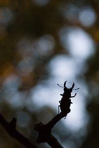 silhouet van zwaaiend vliegend hert