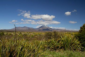 Der Berg Tongariro von Laura Koppen