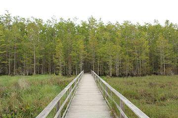 Bos in Florida von Martin van den Berg Mandy Steehouwer