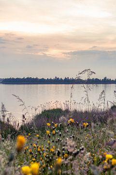 Paysage naturel néerlandais dans le delta sur Fotografiecor .nl