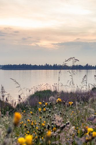 Nederlands Natuurlandschap in de Delta