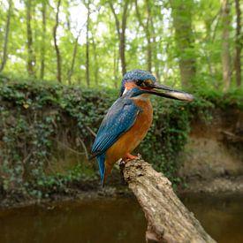 IJsvogel met vis van Luuk Belgers