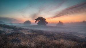 Brouillard sur la lande sur Steffen Peters