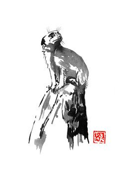 suricatt van philippe imbert