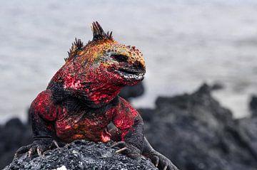 Galapagos Draak van Markus Rotarius