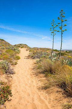 Duinen zandpad en agaves portugel van Susanne Bauernfeind