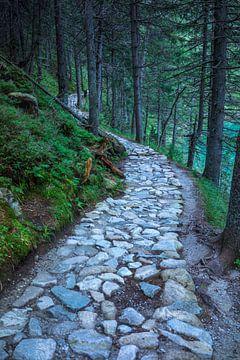Stone path in forest van Arkadiusz Kurnicki