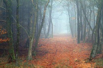 Mysterieus bospad in het Roekelse bos van