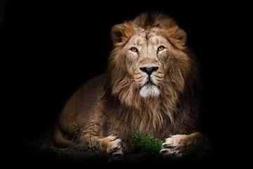 Ein stattlicher Löwe in vollem Wachstum sitzt imposant in der nächtlichen Dunkelheit vor einem grüne von Michael Semenov