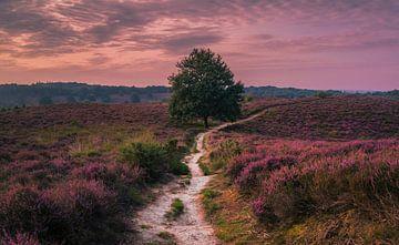 Follow the path into the Pink Wilderness sur Joris Pannemans - Loris Photography