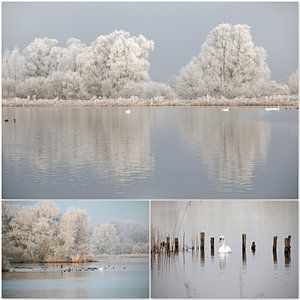 Winter-collage