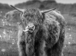 Schotse hooglader zwart /wit uniek van Kuifje-fotografie