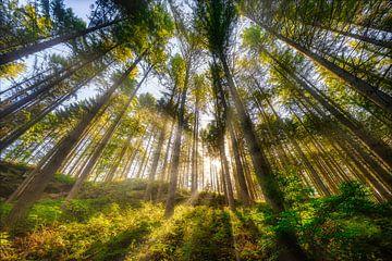 Sonnenstrahlen von Arjen Roos