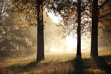 Morgenstimmung mit Bäumen von Jana Behr